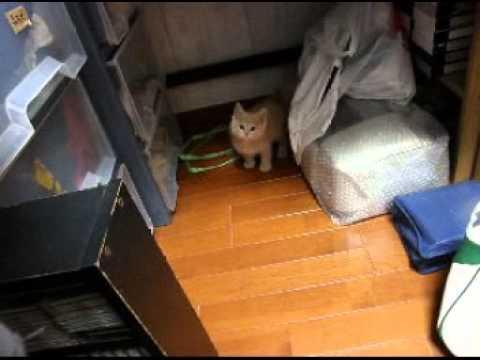 都内一人暮らし男が子猫を拾った...