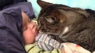 スヤスヤ眠る赤ちゃんをしっかりガードするニャンコ