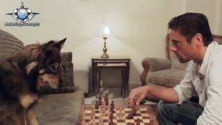 JLS Marketing Concepts Chess Dog Commercial
