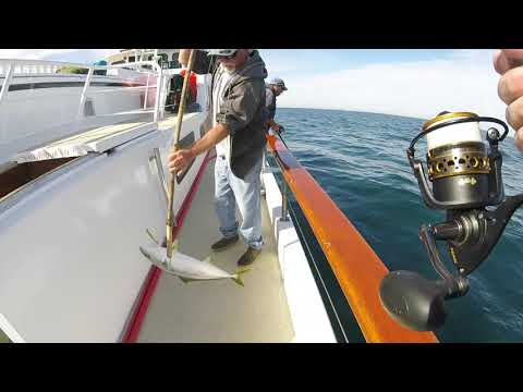 BITE'RRR!!!   Epic Sportfishing Out Of San Diego