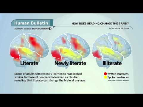Science Bulletins: How Does Reading Change the Brain?