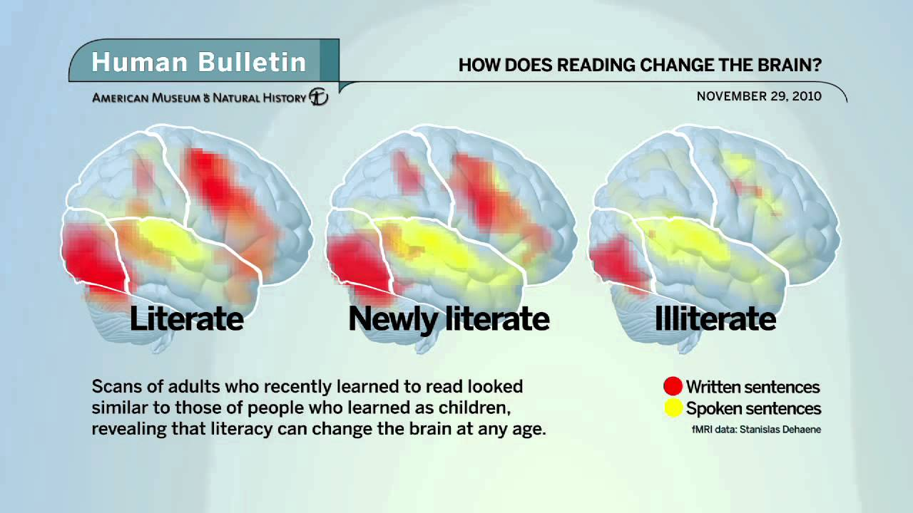 Image result for images of how reading changed the brain