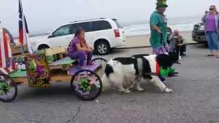 Galveston Mardi Gras pet parade