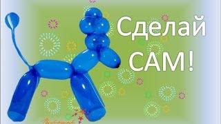 Видео урок Пудель из ШДМ / the dog balloon