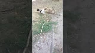 Милые животные отдаем в хорошие руки в Казахстане В Шымкенте что заинтересовало? Номер в описании
