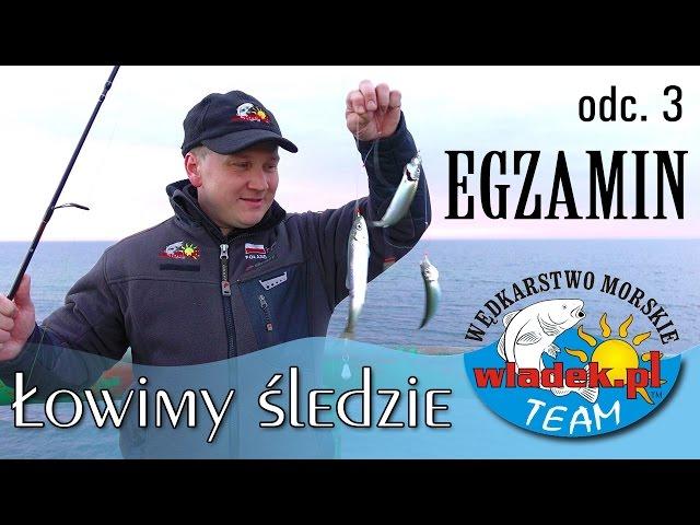 WładekTV - Łowimy ŚLEDZIE z wladek.pl TEAM - podsumowanie (odc.3)