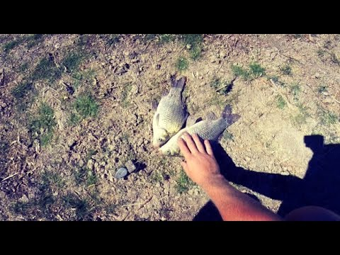 ловля густеры на опарыша