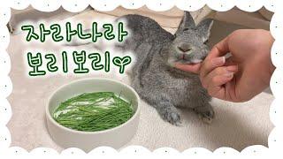 [VLOG] 자라나라 보리보리   토끼가 먹어도 되는 …
