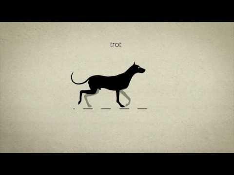 Полезная анимация про собак