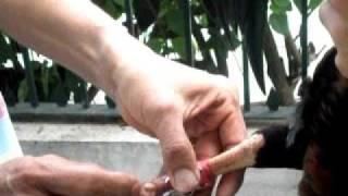 Repeat youtube video Sabong knife tying video - Socket LK