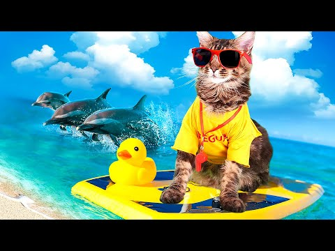 SWIMMING CATS