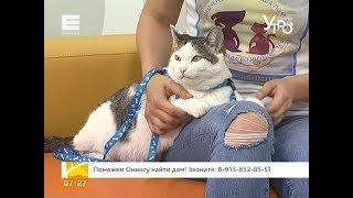 Кот мечты: поможем Ониксу найти дом