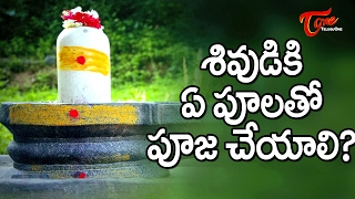 Maha Shivaratri  || Which Flowers To Be Used For Lord Shiva Pooja ? || #MahaShivaratri