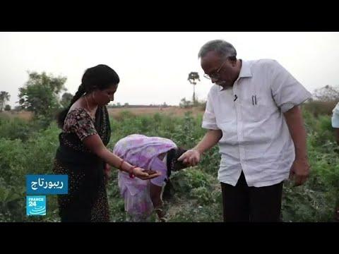 برنامج للزراعة العضوية ينقذ أراضي ولاية أندرا براديش الهندية.. ما تقنياته؟  - نشر قبل 33 دقيقة