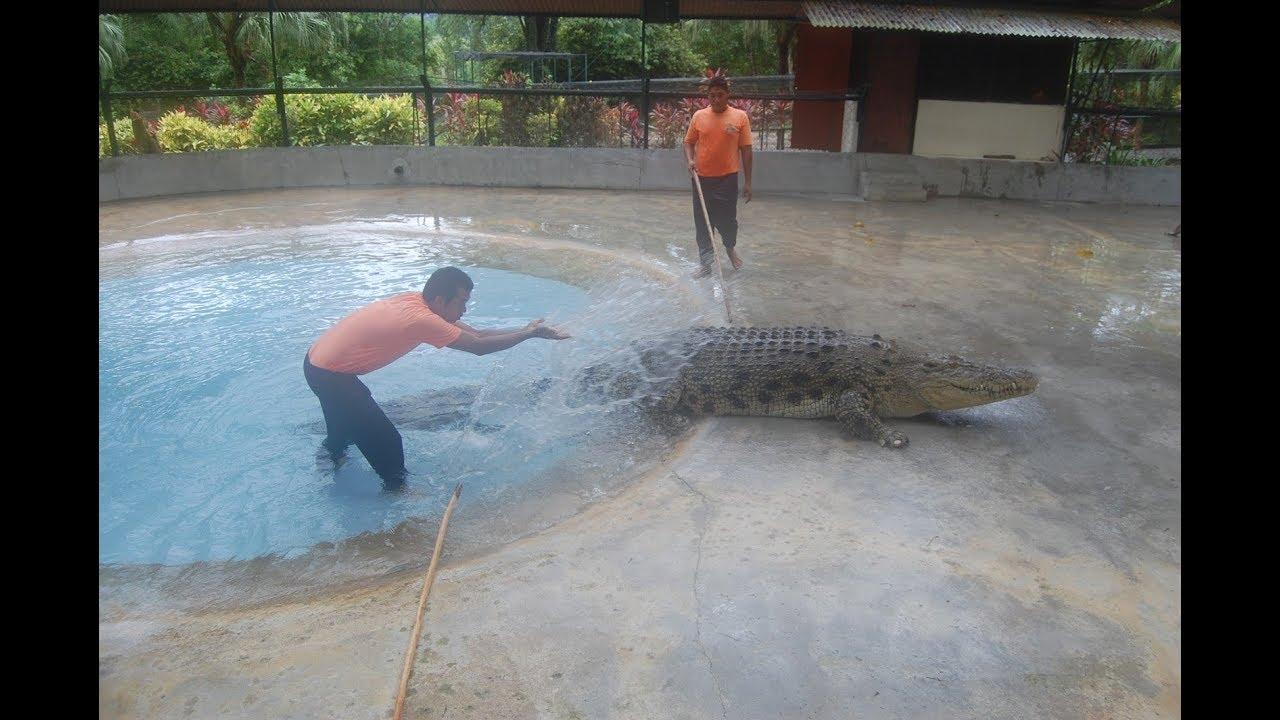 interior crocidile aligator penis
