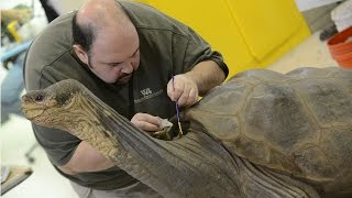 Preserving Lonesome George