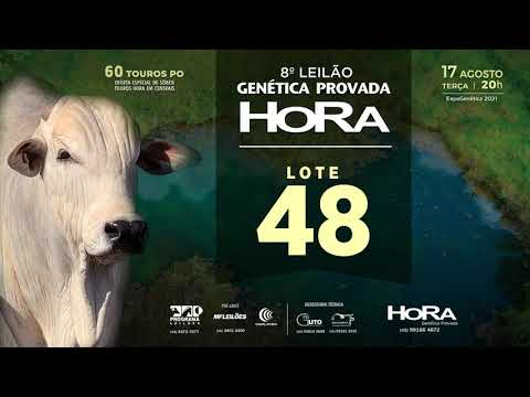 LOTE 48