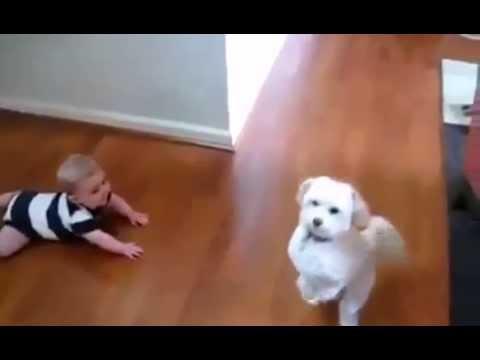 детские приколы с животными видео