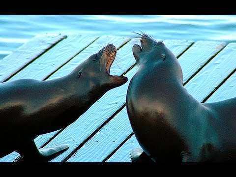 CRAZY SEA LION GANG FIGHT!