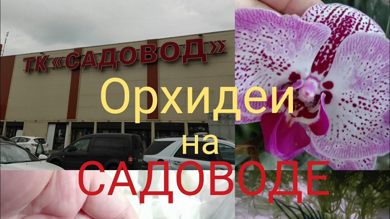 ОРХИДЕИ _ Уценки орхидей в ОБИ _ Стоит ли покупать _ - YouTube