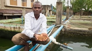 Nigeria's Fish Farmers Take New Paths to Profitability