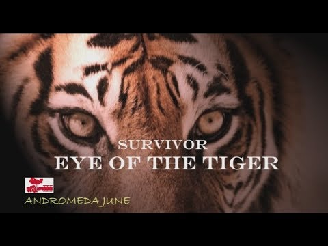 เพลงสากลแปลไทย Eyes Of The Tiger - Survivor (Lyrics & Thai subtitle)