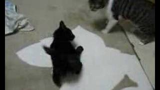 生後4ヶ月と生後1ヶ月半くらい。 8秒頃、猫キックがきれいに決まりま...