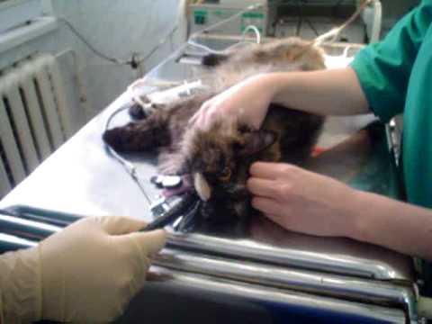 Кость у кота в горле