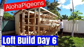 Homing Racing Pigeon Loft Construction Day 6