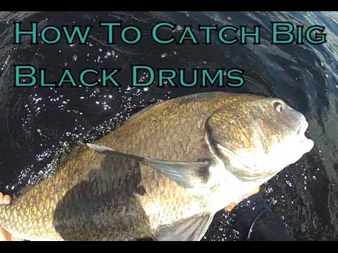 how to catch red drum in nc
