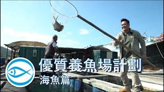 優質養魚場計劃 – 海魚篇:由麥包帶你參觀南丫島索罟灣魚排
