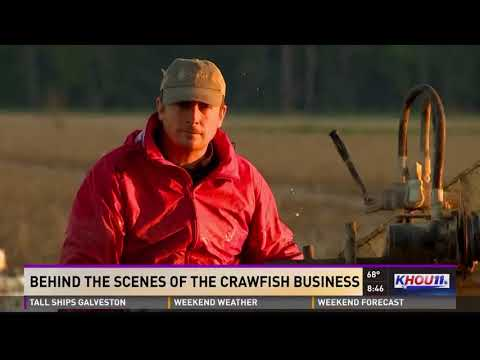 Behind The Scenes Of The Crawfish Business