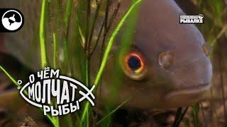 Где искать рыбу в озере   О чем молчат рыбы
