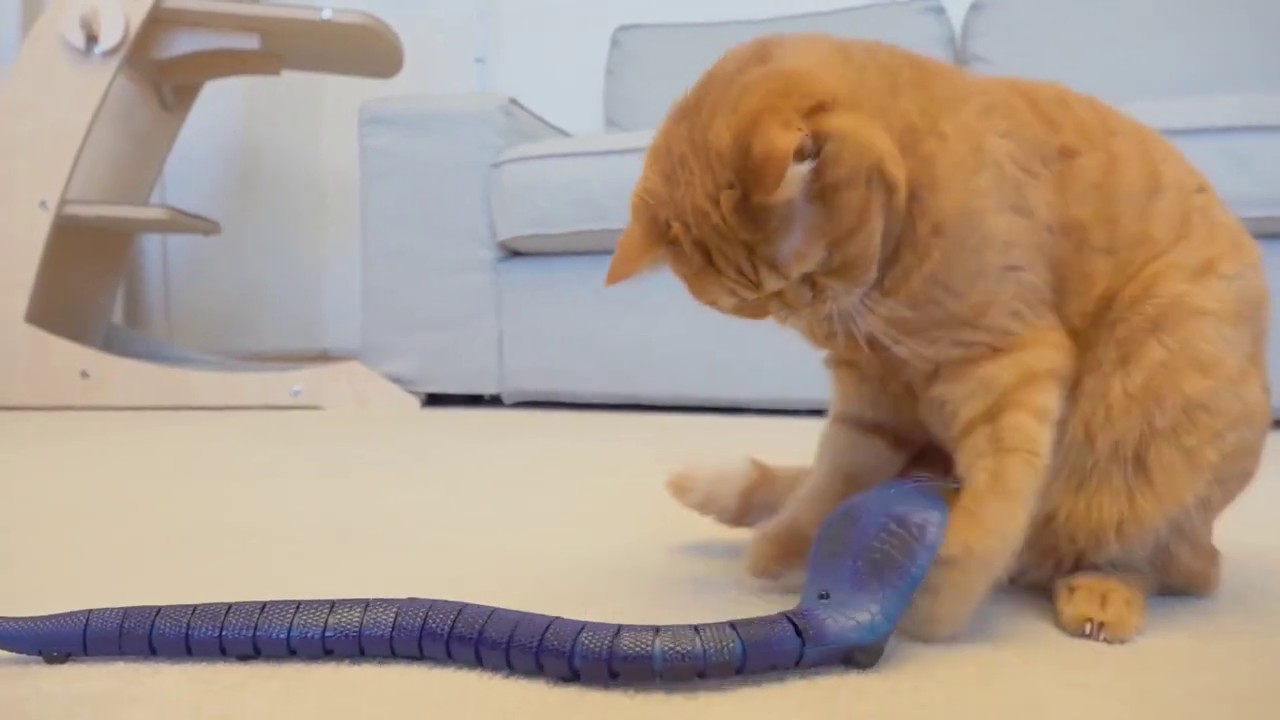 SNAKE PRANK and Cat's Reaction