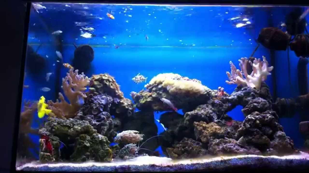 Aquarium eau de mer youtube for Achat aquarium eau de mer