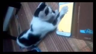 Funny Cat Catching Mouse