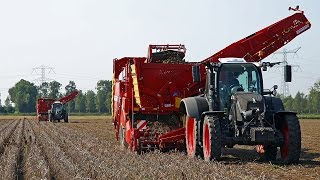 Black Beauty and the Grimme | Gebr. de Zeeuw | Fendt 720 & 724 S4 + Grimme SV 260