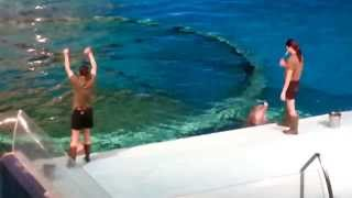 Amazing Dolphin Show at Indianapolis Zoo, Indiana