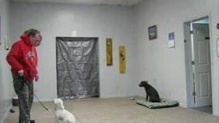 #2 Fear Biter 1 Week Into Dog Training Bootcamp Cincinnati - Video 2 - Getting Better