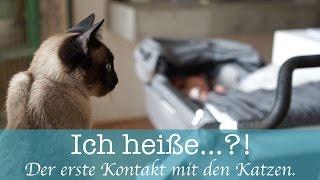 Klein-Erbse heißt...?! - Unsere Katzen lernen das Baby kennen!