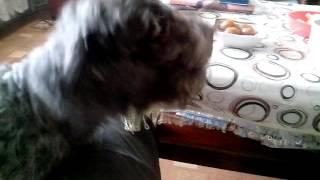 Собака не хочет чтобы хозяин уходил(Собака жалобно скулит и не пускает хозяина выйти., 2016-06-20T08:00:49.000Z)