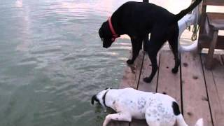 Catfishing doggie style A Must Watch!  http://facebook.com/everythingdogs