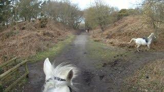 Chasing a runaway horse