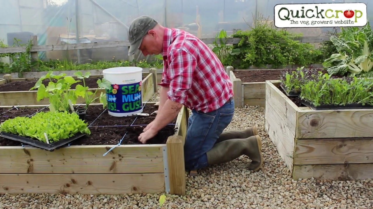 Square Foot Gardening   YouTube