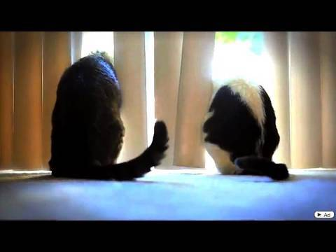 Cats of Autumn – Music Video