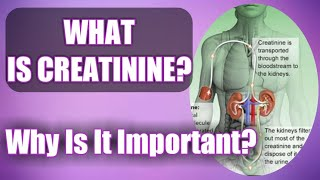 Creatinine: What Is It And Why Is It So Important? (Causes Of High Creatinine Levels)
