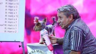 """Ion Paliu feat. """"INNA"""". Bendeac n-a mai suportat prestația și s-a transformat într-un câine! Video"""
