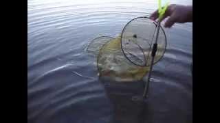 видео Летняя рыбалка на вазузе