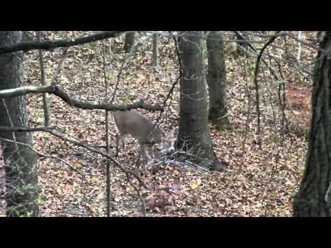bow hunting Hastings, MI