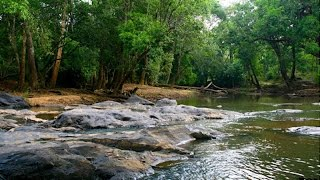 Gavi Eco Tourism Gavi Kerala